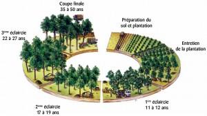 Périgord maisons bois, offre respectueuse de l'environnement