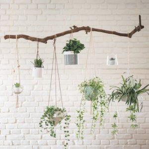 jardin-plantes-suspendues-tendance-outdoor-2020-constructeur-de-maisons-individuelles-périgord-maisons-bois